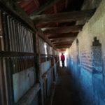 Vol.5&6 ネルトリンゲン&アウグスブルク観光~隕石と城壁の街&ローマ皇帝の街~