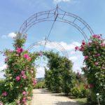ドイツのバラ専門店&庭園へ!圧巻の品揃え!ADRのバラも購入。